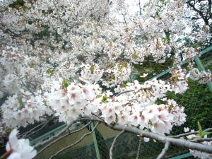 京都vol.1(2008年4月8日)15