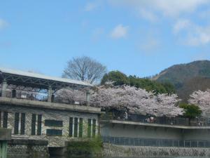 京都vol.1(2008年4月8日)21