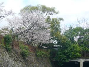 京都vol.1(2008年4月8日)22