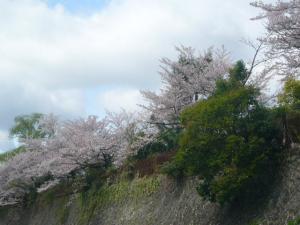 京都vol.1(2008年4月8日)23