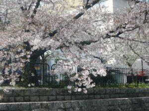 京都vol.1(2008年4月8日)25