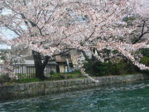 京都vol.1(2008年4月8日)26