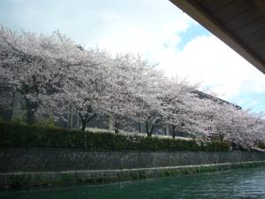 京都vol.1(2008年4月8日)28