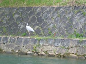 京都vol.1(2008年4月8日)29