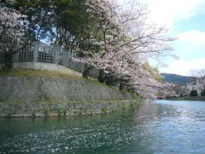 京都vol.1(2008年4月8日)30