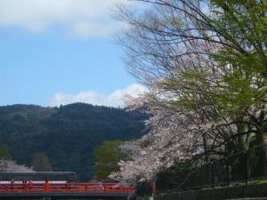 京都vol.2(2008年4月8日)1