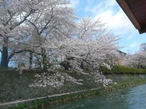 京都vol.2(2008年4月8日)4