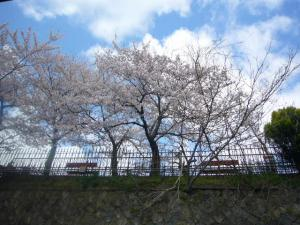 京都vol.2(2008年4月8日)5