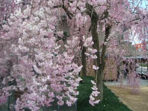 京都vol.2(2008年4月8日)8