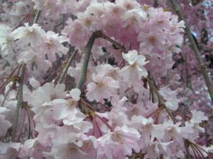 京都vol.2(2008年4月8日)9