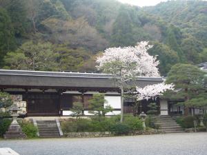 京都vol.2(2008年4月8日)13
