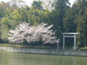 20080415皇祖皇太神宮、酒列、大洗磯前神社3