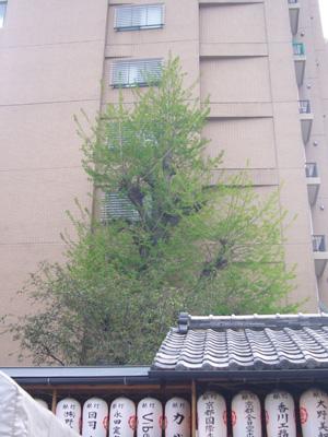 京都 (2008年4月26日)46