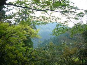 京都 (2008年4月27日)14