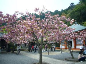 京都 (2008年4月27日)18