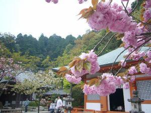 京都 (2008年4月27日)19