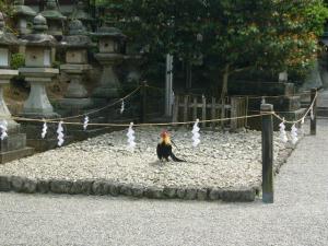 奈良(2008年4月28日)8