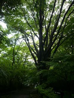 20080530箱根神社1
