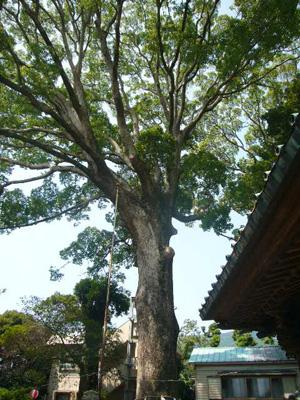 真鶴貴船神社,来宮神社、三石23