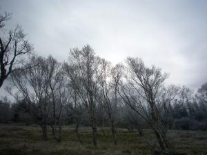 蓼科他(2008年11月11日)26