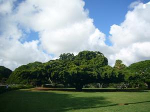 ハワイvol.2(2008年12月3日)18