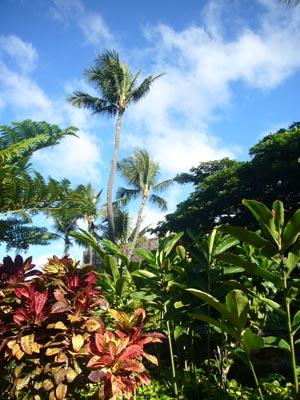 ハワイvol.4(2008年12月6日)3