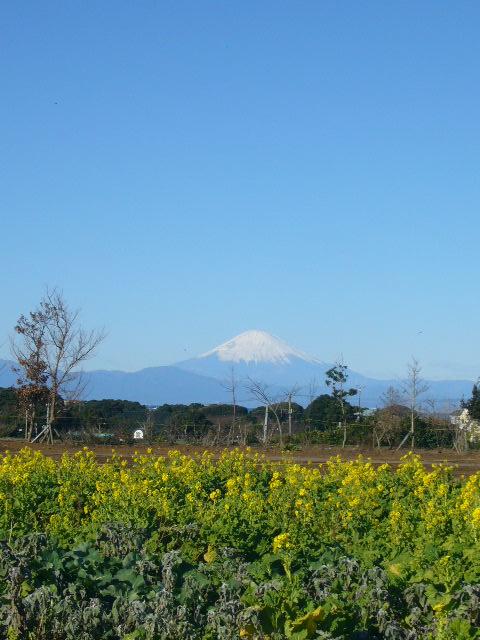 三崎葉山(2009年1月2日)4