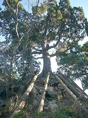 三崎葉山(2009年1月2日)19