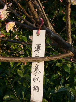 スサノオ神社・白山・湯島天神10