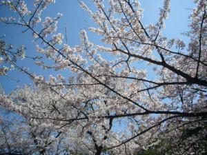 済州島vol.1(2009年3月24日)18