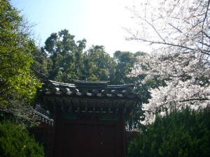 済州島vol.1(2009年3月24日)19