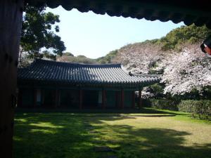 済州島vol.1(2009年3月24日)23
