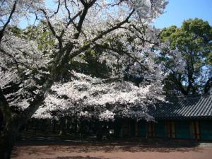済州島vol.1(2009年3月24日)25