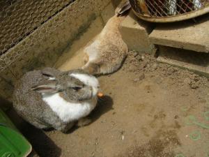 牛久の大仏(2009年5月4日)16