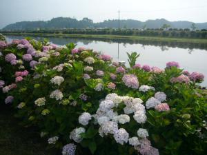 東飯倉(2009年6月13日)1