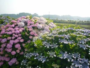 東飯倉(2009年6月13日)9