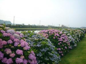 東飯倉(2009年6月13日)11