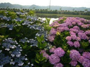 東飯倉(2009年6月13日)12