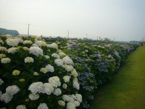 東飯倉(2009年6月13日)13