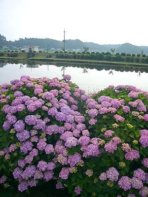 東飯倉(2009年6月13日)14
