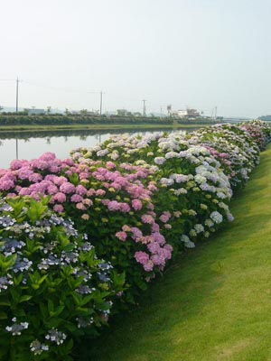 東飯倉(2009年6月13日)15