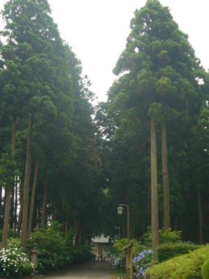 東飯倉(2009年6月13日)25