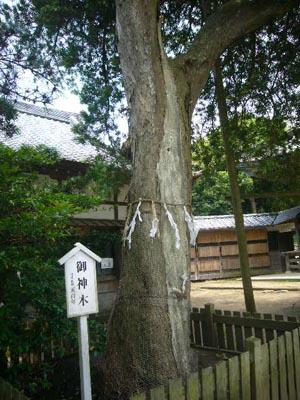 東飯倉(2009年6月13日)32