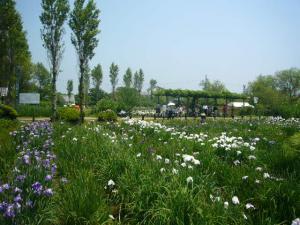 佐原水生植物園(2009年6月27日)6