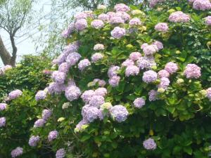 佐原水生植物園(2009年6月27日)16