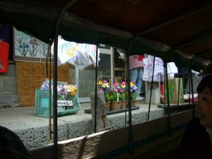 佐原水生植物園(2009年6月27日)21