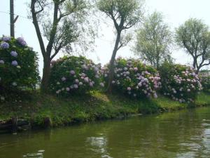 佐原水生植物園(2009年6月27日)31