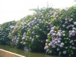 佐原水生植物園(2009年6月27日)32