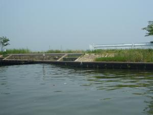 佐原水生植物園(2009年6月27日)33