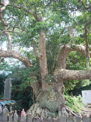 佐原水生植物園(2009年6月27日)37